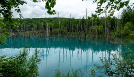 Blue Pond (Aoiike in Biei) Hokkaido, JAPAN Jul 2015 Stock Images