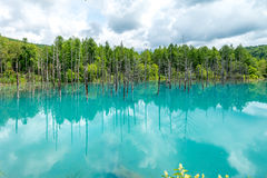 Blue Pond (Aoiike in Biei) Hokkaido, JAPAN Jul 2015 Royalty Free Stock Photography