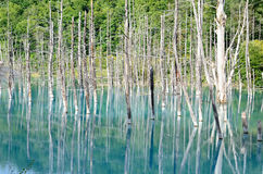 Blue Pond in Biei, Shirogane. Stock Photos