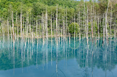 Blue Pond in Biei, Shirogane. Stock Images