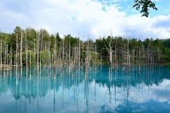 Blue Pond in Biei, Shirogane. Royalty Free Stock Photo