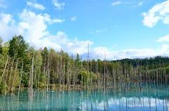 Blue Pond in Biei, Shirogane. royalty free stock image