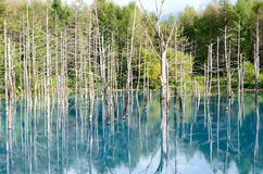 Blue Pond in Biei, Shirogane. Stock Photography