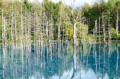 Blue Pond in Biei, Shirogane. stock photography