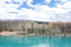 Blue pond and sky Stock Image