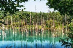 Blue Pond Royalty Free Stock Photos