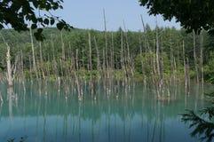 Blue Pond Stock Images