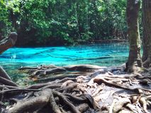 Blue Pool. And tree Royalty Free Stock Images