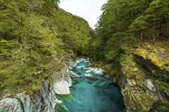 Blue Pools in Mount Aspiring National Park Royalty Free Stock Photography