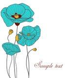 Blue poppies Stock Photos