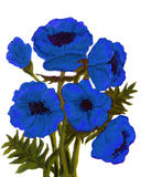 Blue poppies Royalty Free Stock Images