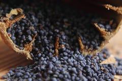 Blue poppy seeds Stock Photos