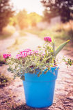 Blue pot with garden flowers on summer or autumn nature background Stock Photography