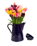 Blue pot with  of tulips flowers  close up Stock Image