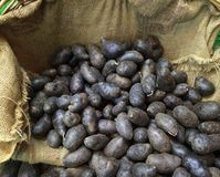 Blue Potatoes Royalty Free Stock Photos