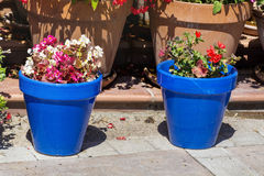 Blue pots with flowers for street decoration in Spain Stock Image
