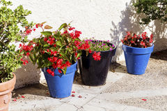 Blue pots with red geranium flowers for street decoration in Spain Stock Photo
