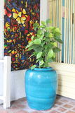 Blue potted golden pothos Royalty Free Stock Images