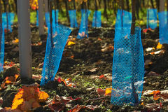 Blue protection net. Extreme close-up of the blue protection net for young wine grapes Stock Photos