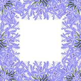 Blue Purple Agapanthus Border - Lily of the Nile, African Lily. Vector Illustration. isolated on White Background Vector Illustration