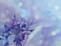 Blue-purple flower on the transparent  blue blurred background. Close-up. floral composition. floral background. Nature Stock Images