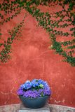 Blue and purple flowers in grey flowerpot. stock photography