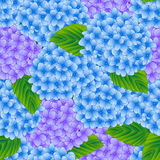 Blue and Purple Hydrangea Flower Seamless Background. Vector Illustration Stock Photography