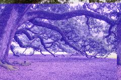 Blue, Purple, Nature, Tree Royalty Free Stock Images