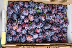 Blue or purple prune plums at the market Stock Image