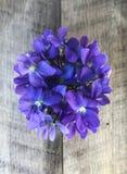 Blue / Purple Violet Flowers in Vase. Vase of blue or purple violet flowers stock image
