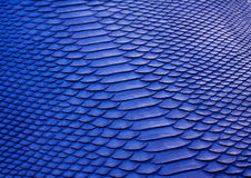 Blue python  leather texture Royalty Free Stock Photo