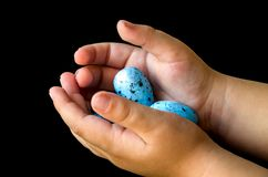 Blue quail eggs and hands royalty free stock photos