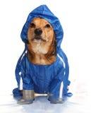 Bathroom dog Stock Photography