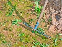 Blue rake. Blue metal rake near a tree Stock Image