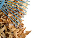 Blue rake over yellow dried leaves Stock Images