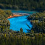 Blue rapid river. Flows through the wild area with coniferous forest. Altai Republic, Russia. Tilt shift effect applied stock photos