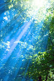 Blue rays in forest Royalty Free Stock Photography