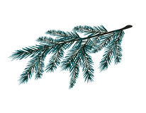 Blue realistic branch of fir tree. Fir branches. Isolated on white.. Christmas vector illustration Stock Photo