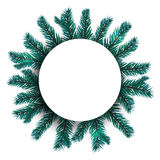 Blue, realistic fir branches. Spruce branch in a circle from the center of the picture. Advertising Space Offers Stock Photos