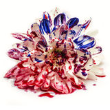 Blue Red Bleeding Painted Flower Royalty Free Stock Photography