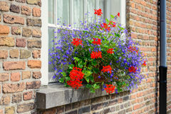 Blue and red blooming plants in the windowsill Stock Images