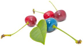 Blue and Red Cherries with Green Leaf Royalty Free Stock Photo