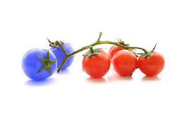 Blue and red colored cherry tomatoes on white Stock Photos