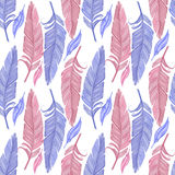 Blue and red feather. On white background Royalty Free Stock Photo