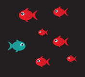Colors fish. Blue and red fish over black background vector illustration Stock Photography