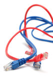 Blue and red network cables Stock Photography