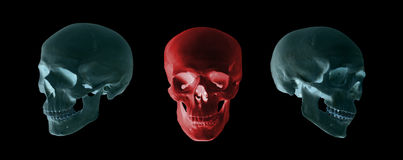 Blue and red skulls Royalty Free Stock Image