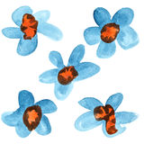 Blue - red watercolor flowers Stock Image