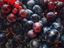 Blue and red wine grapes Stock Photos