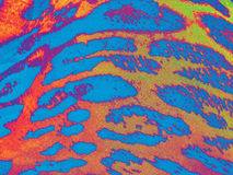 Blue-red-yellow gradiented leopard textile background Royalty Free Stock Photo